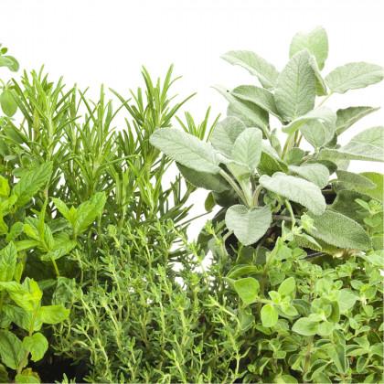 Aromatické byliny - směs bylinek - osivo bylin - 0,2 g
