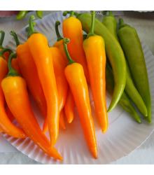 Paprika kozí/baraní roh Harvey - Capsicum annuum - predaj semien - 40 ks