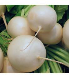 Reďkovka Albena - Raphanus sativus - predaj semien reďkovky - 300 ks
