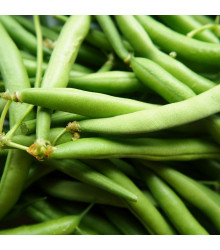 Fazuľa kríčková Delinel - Phaseolus vulgaris - predaj semien fazule - 20 ks