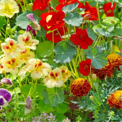 Letničky směs - Visuté zahrady - popínavé rostliny - 0,9 gr