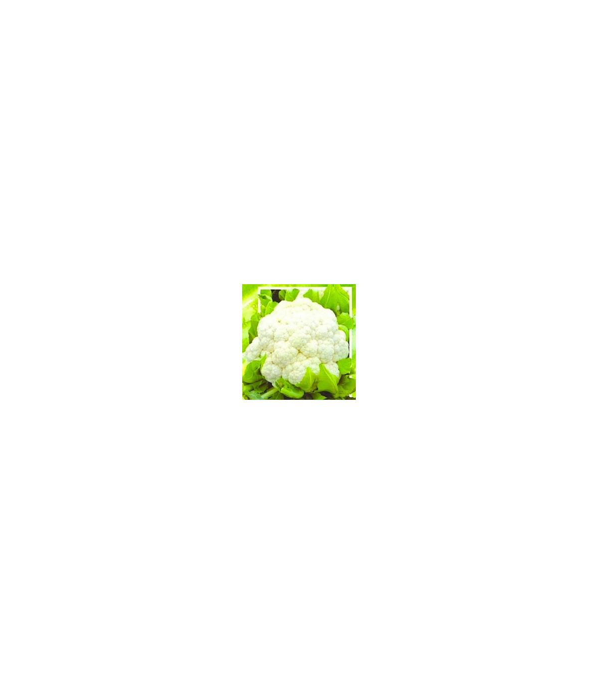 Květák polopozdní Brilant - semínka květáku - 0,5 gr