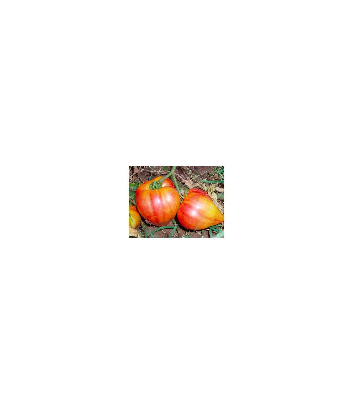 Rajče ruské oranžové - semena Rajčat - 6 ks