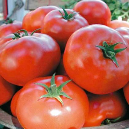 Rajče Legenda - semena Rajčat - původní odrůdy rajčat - 6 ks