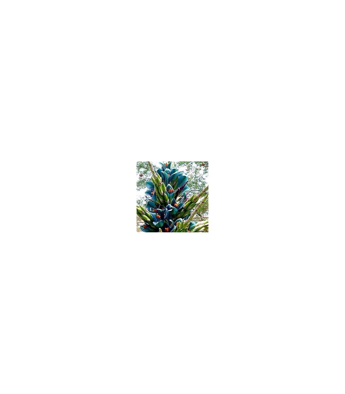 Puya Berteroniana - semena - 5 ks