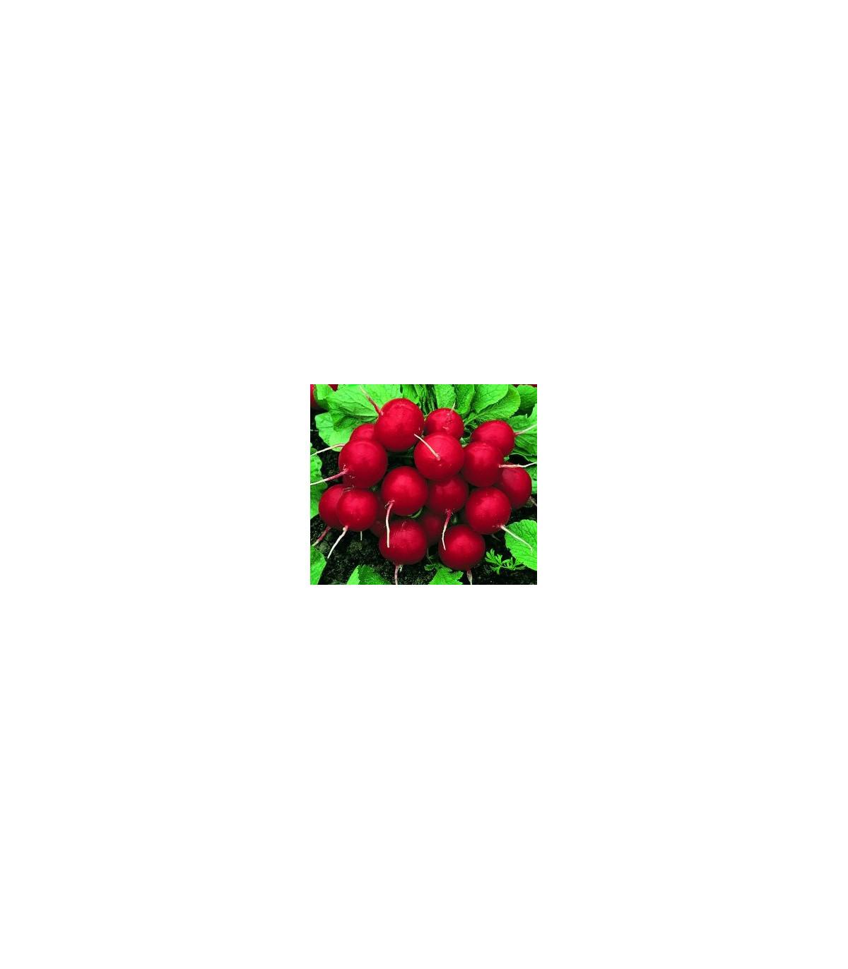 Ředkvička červená kulatá - Carnita - semena Ředkvičky - 50ks