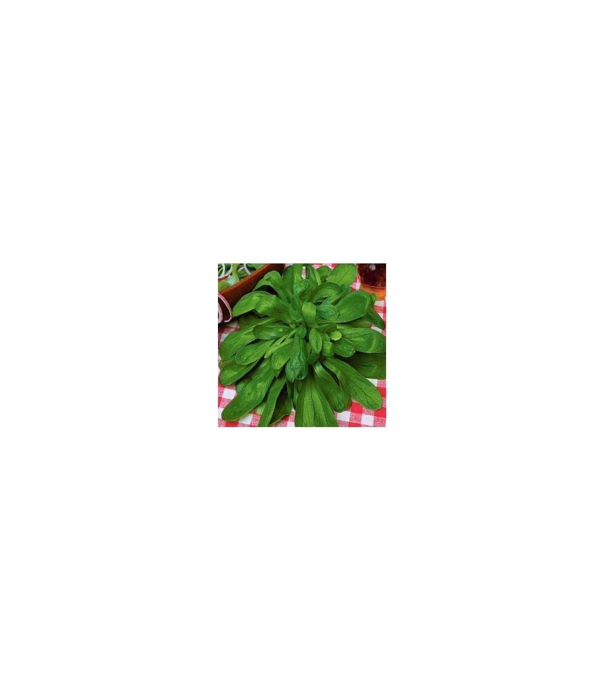 Kozlíček polní Prager - semena Kozlíčku - Vallerianella locusta - 100 ks