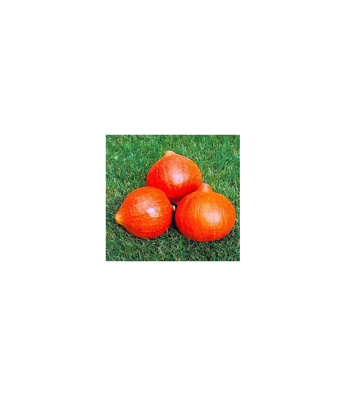 Dýně Uchiki Kuri - semena Dýně - koupit semena tykve - 5 ks
