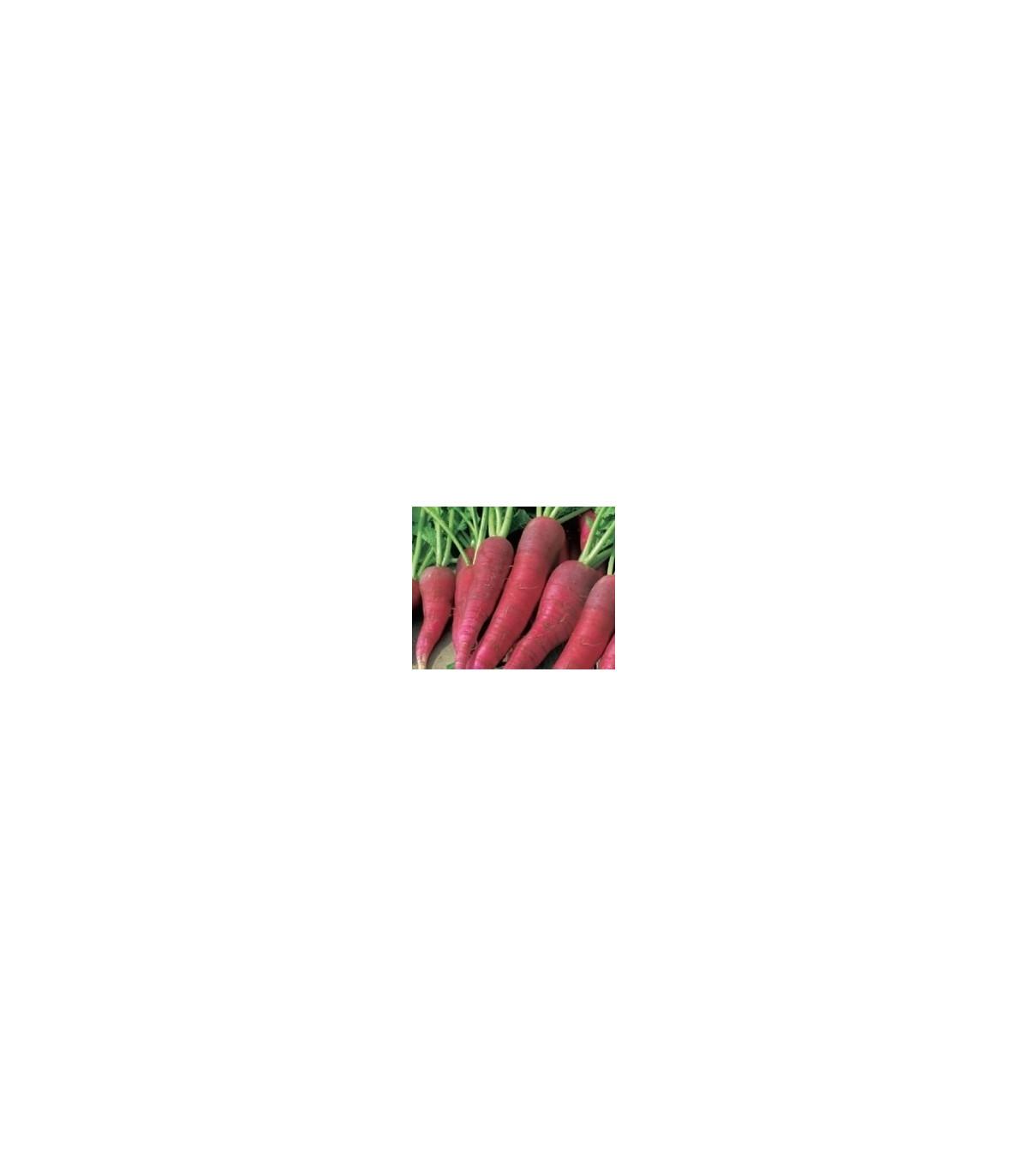 BIO Ředkvička růžová raná - osvio ředkvičky - semínka - 0,3 g