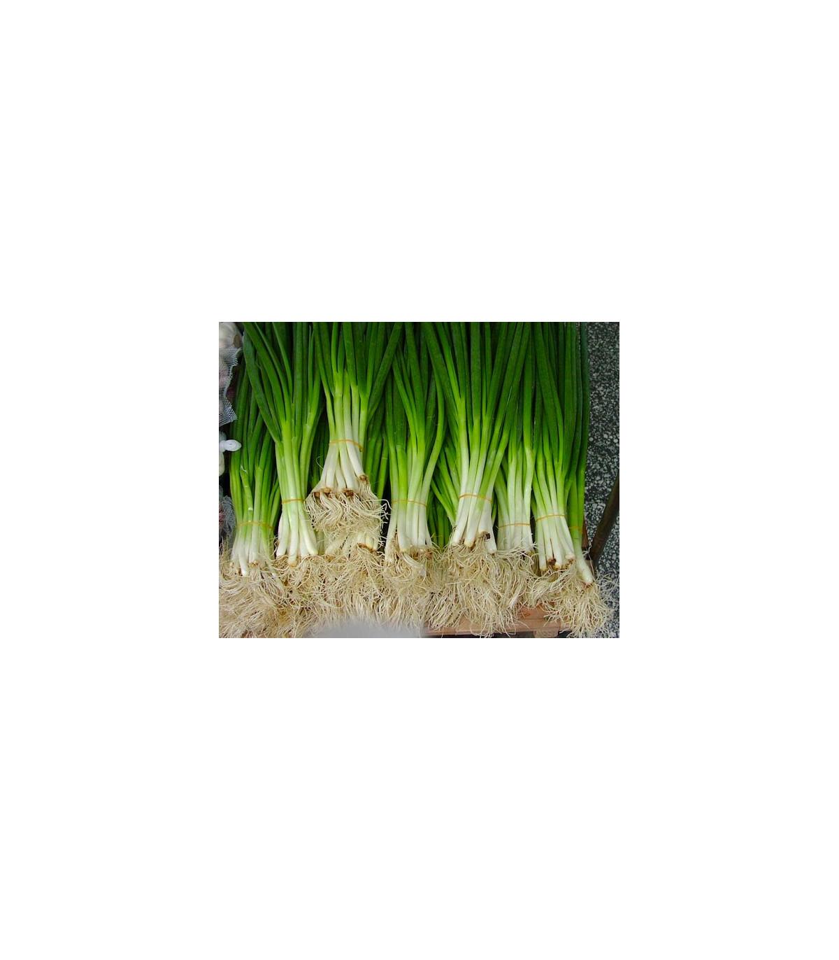 Cibule sečka - semena Cibule - Allium fistulosum L. - 1 gr