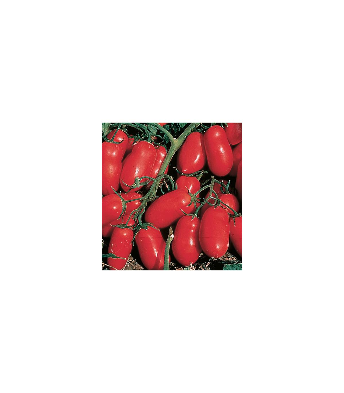 BIO Rajče keříčkové Inka F1 - bio osivo Rajčete - 10 ks