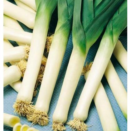 Pór - Genita - osivo pórku - Allium porrum - 1,5 gr