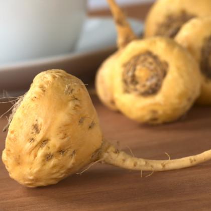 Maca - Maka peruánská - Peruánská viagra - semena Maky - Lepidium Meyenii - 5 ks