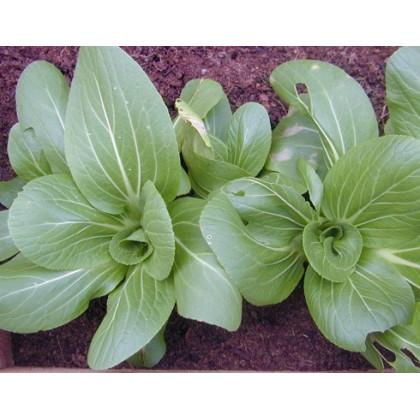 Pak Choi čínské zelí - semena asijské zeleniny - Brassica rapa var rosularis - 0,2 gr