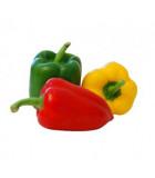 Papriky sladké